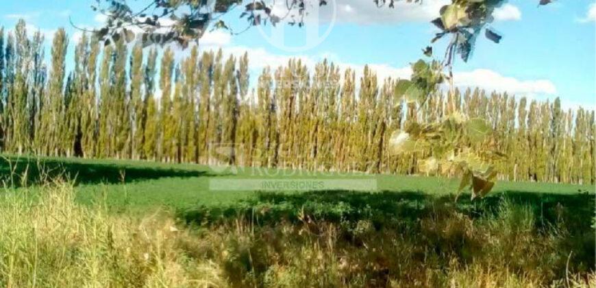 Campo 321,40 has en Colonia 25 de Mayo (La Pampa)