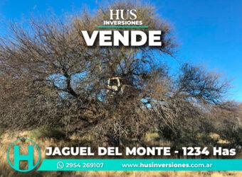1234 has – Zona de Jagüel del Monte, La Pampa.