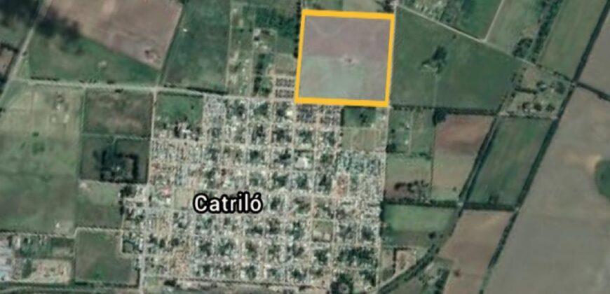 LOTEO SAN JOAQUIN (Catrilo)
